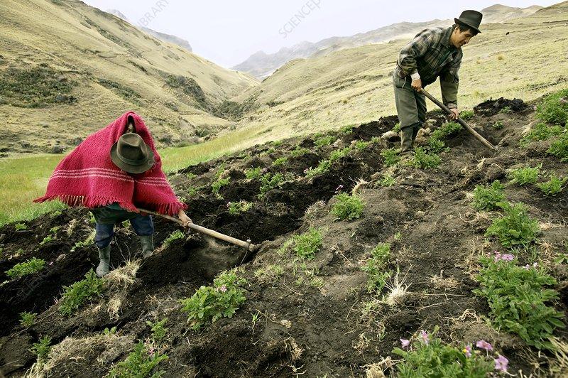 Andean farmers, Ecuador