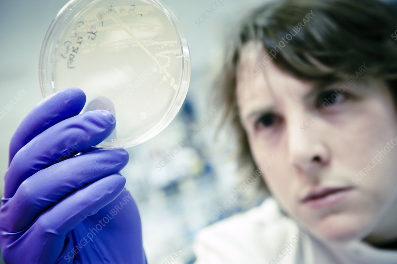 Scientist examines a petri dish