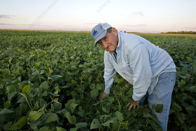 Farmer in a field, USA