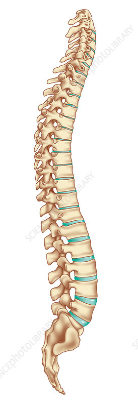 Spinal column, artwork