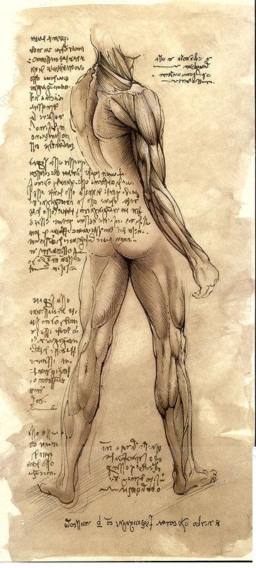 Da Vinci-style anatomical drawings