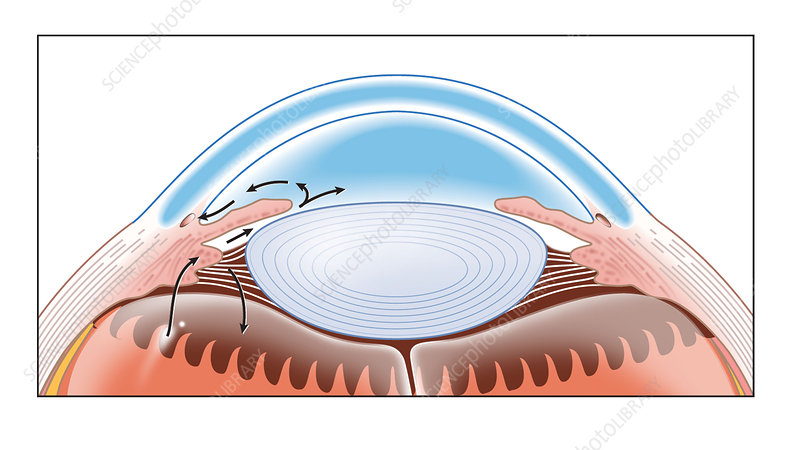 Eye's aqueous humour drainage, artwork