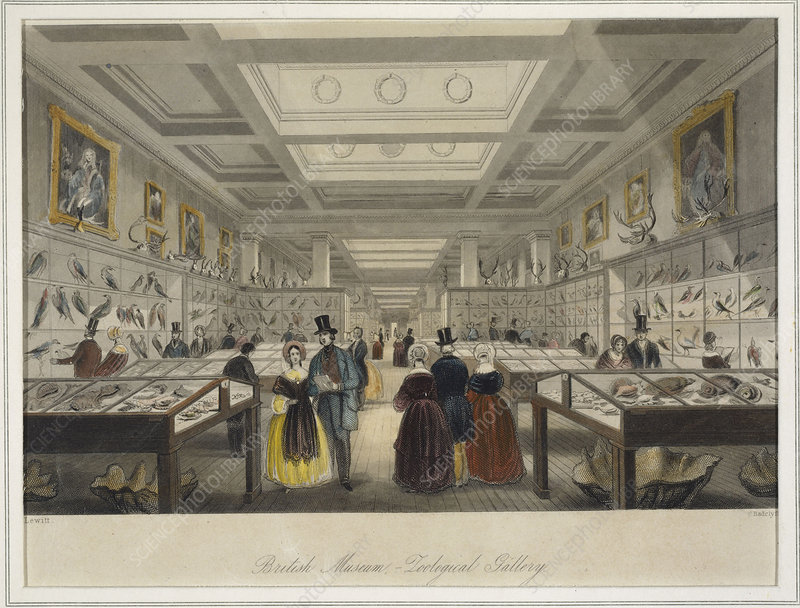 The British Museum's Zoological Gallery