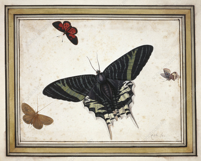 Butterflies, artwork