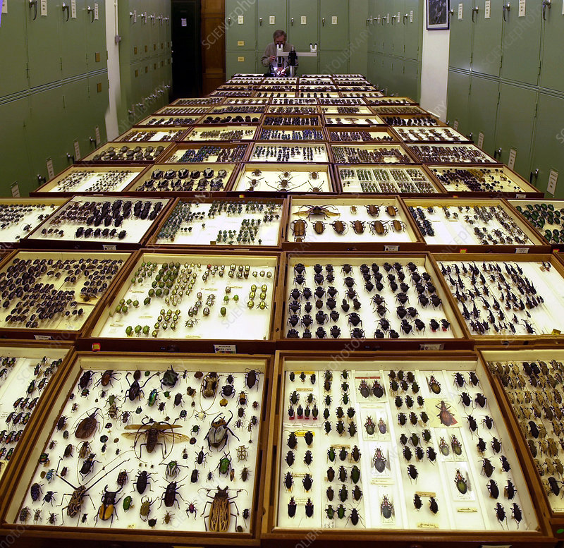 Entomologist with specimens