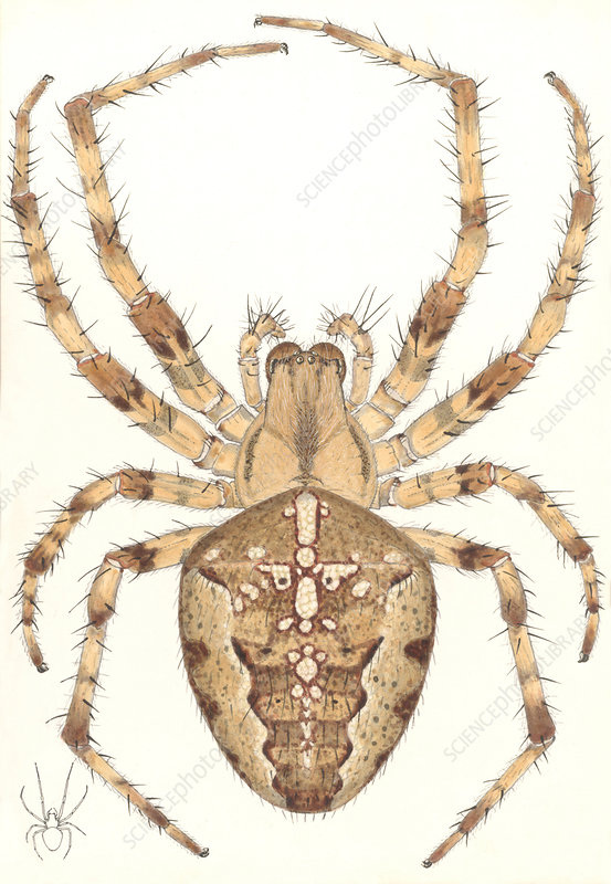 Garden spider, artwork