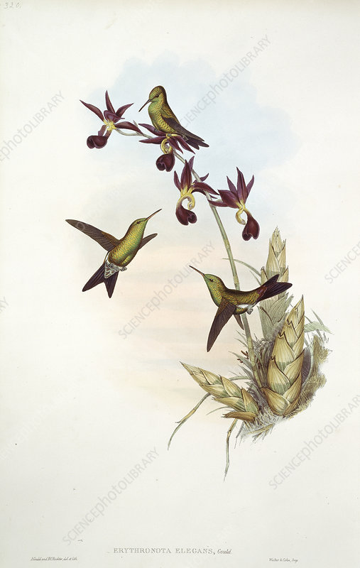 Hummingbirds, artwork