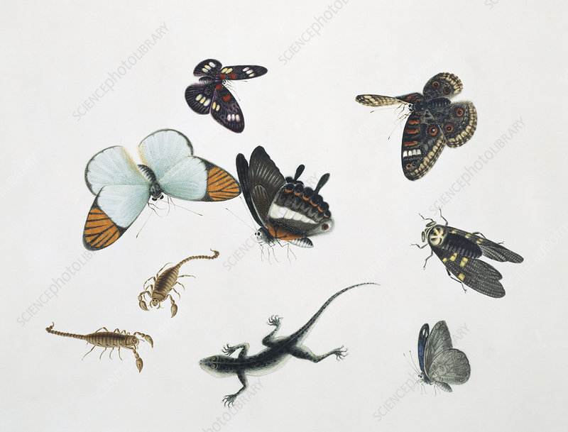 Chinese insects, artwork