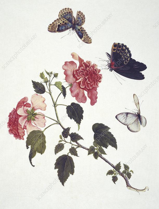 Chinese butterflies, artwork