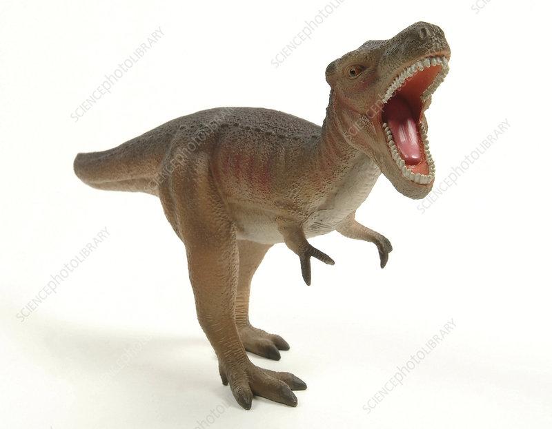 Tyrannosaurus rex dinosaur model
