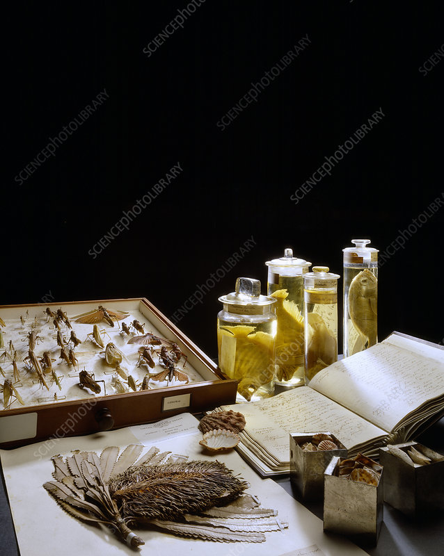Selection of museum specimens