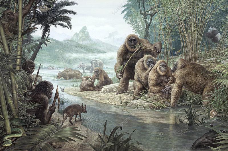 gigantopithecus with homo erectus stock image c0108410