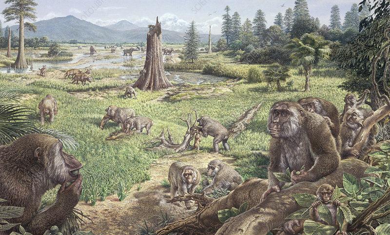 Ankarapithecus, prehistoric ape
