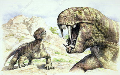 Gorgonopsian, prehistoric proto-mammal