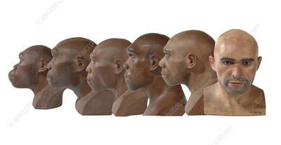 Hominid reconstruction sequence