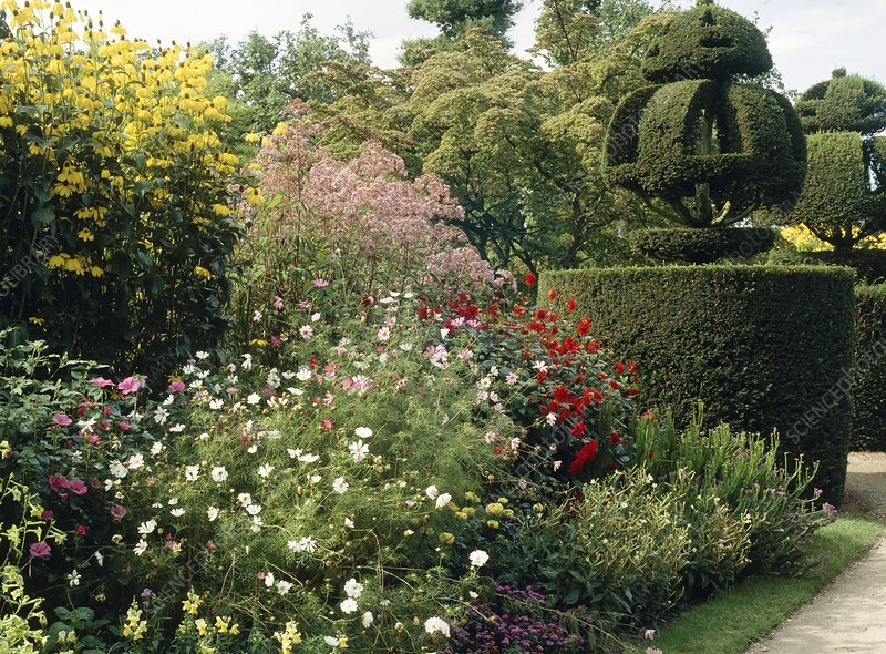 Herbaceous border and topiary