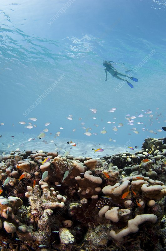 Snorkeller over coral and fish