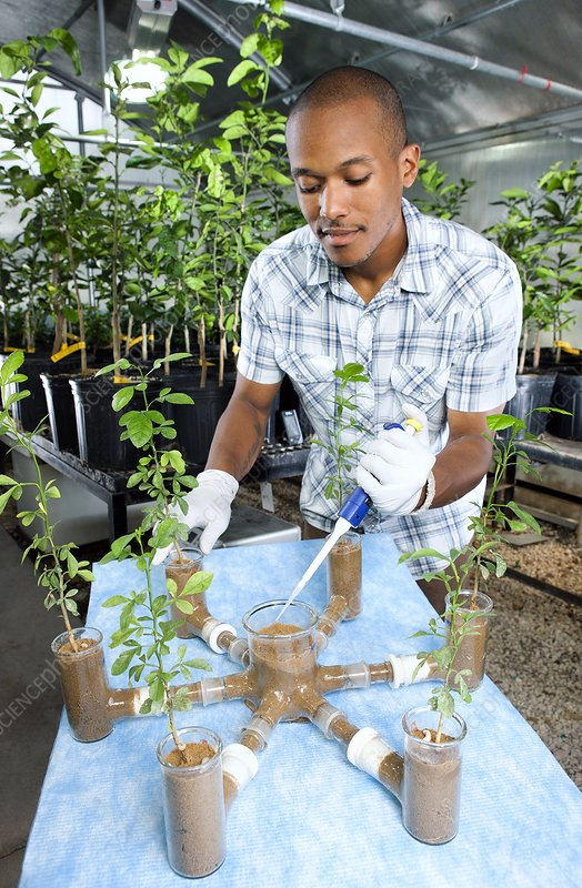 Plant pest control research