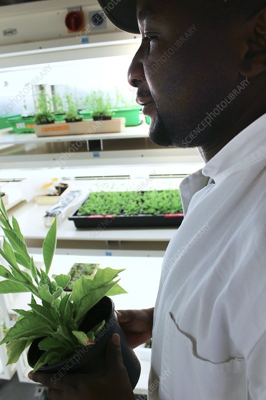 Plant scientist in a cultivation room
