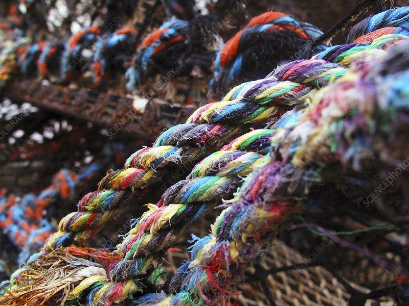Lobster pot ropes