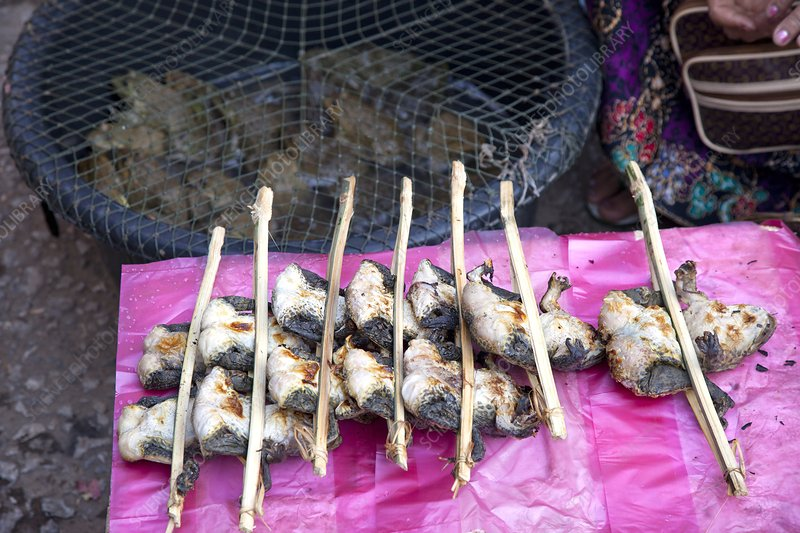 Roasted frogs, Laos food market