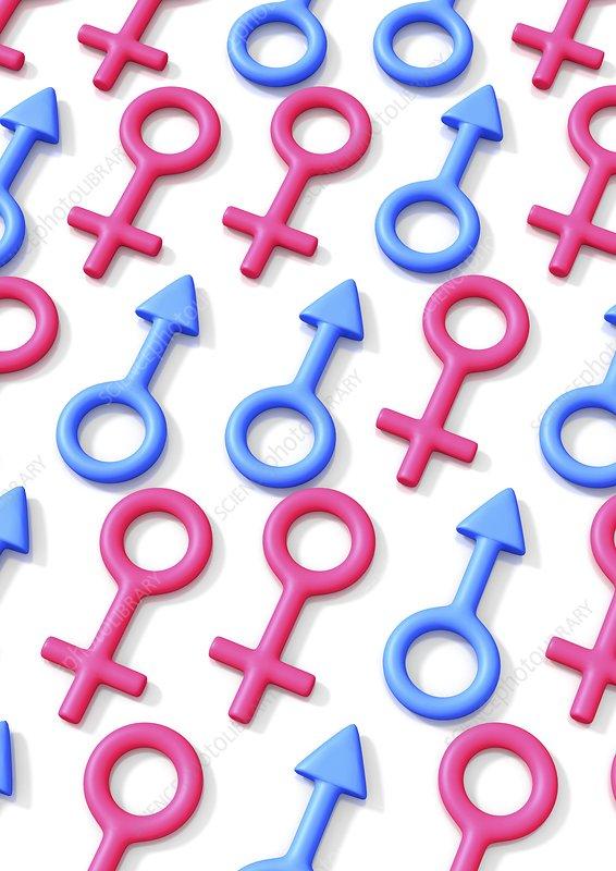 Gender, conceptual artwork