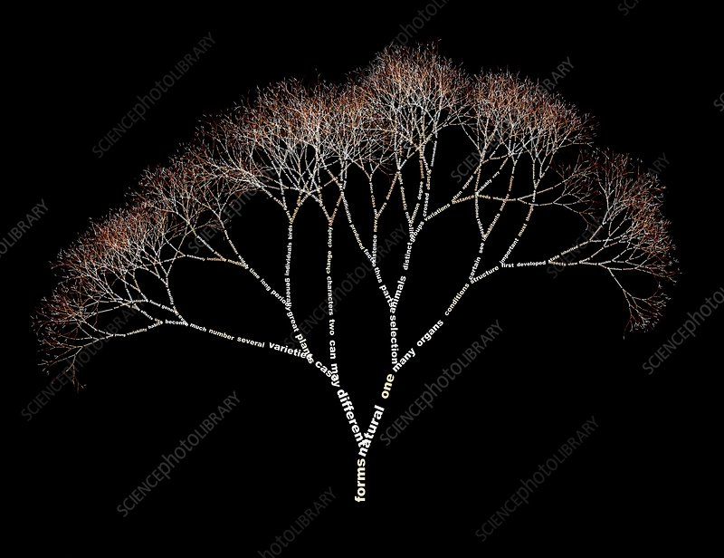 Data visualised as a tree
