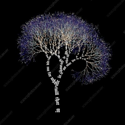 Words visualised as a tree