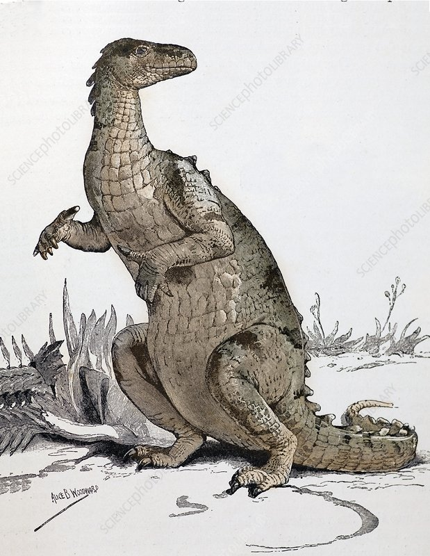 1896 Iguanodon loses its horn, tinted