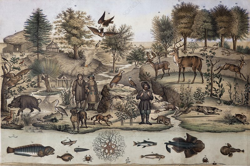 18th C. Temperate Animal Panorama