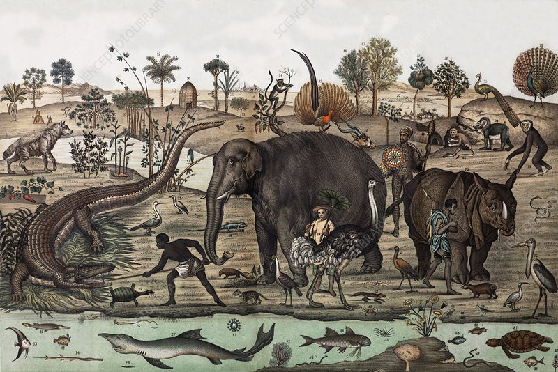 18th C. Tropical Animal Panorama