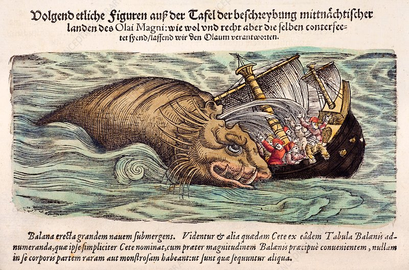 1560 Gesner Whale attacks ship