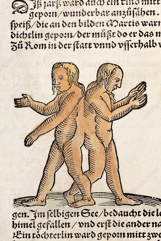 1557 Lycosthenes Conjoined 'Siamese twins
