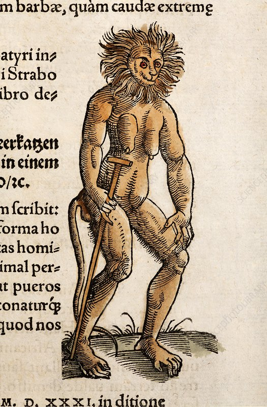 Gesner A Satyr, simian or wild man