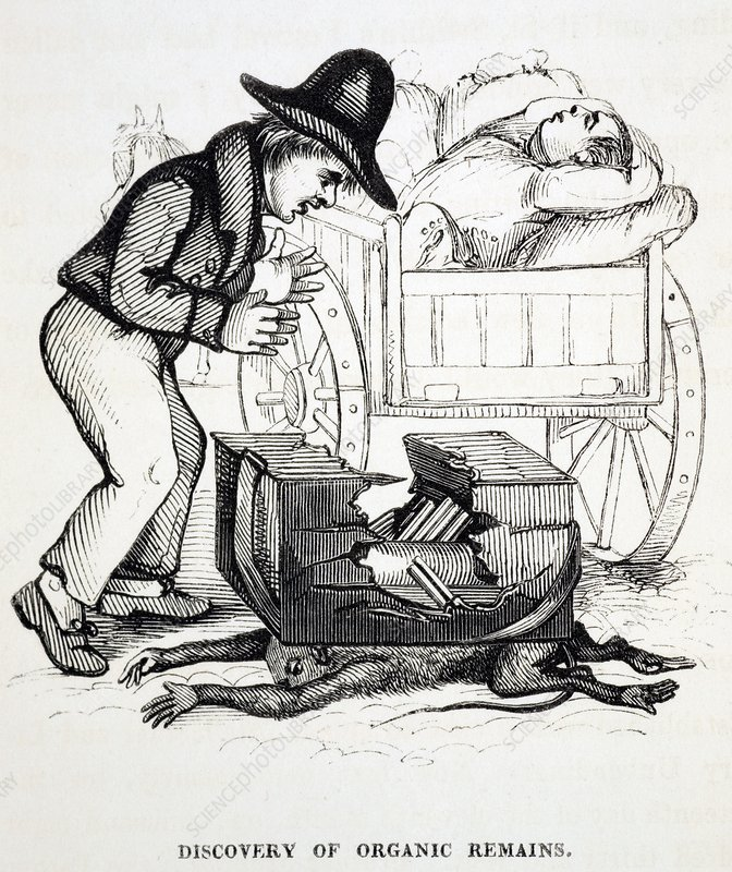 1836 Organic remains early fossil cartoon