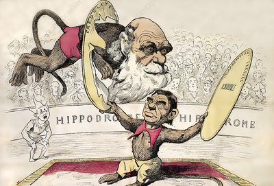 1878 Darwin as a circus monkey by Gill