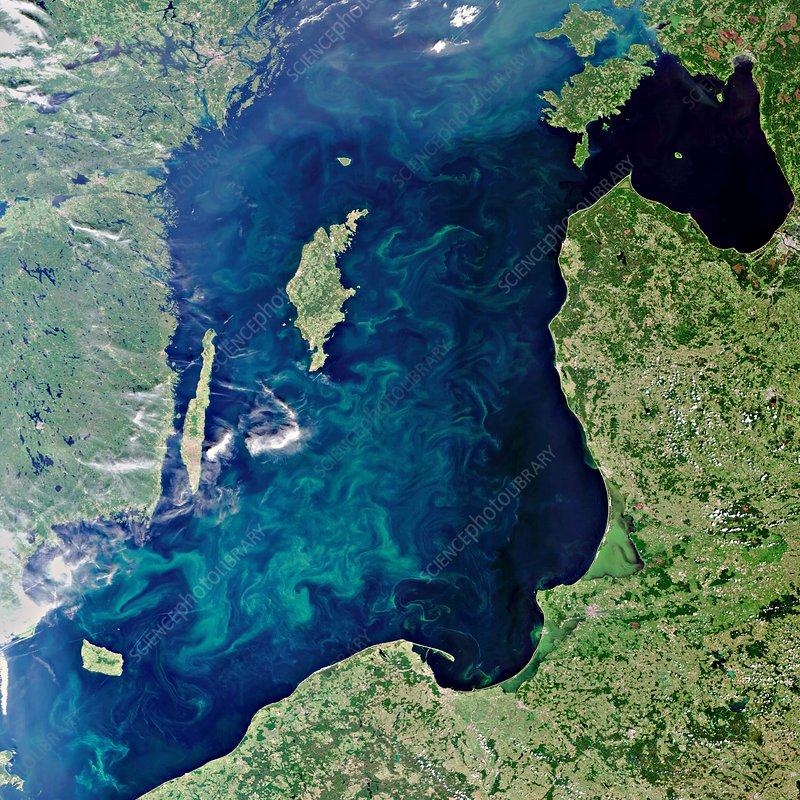Baltic Sea algal bloom, 2010