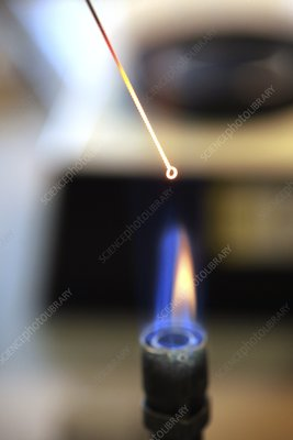 Sterilising a loop with a bunsen burner