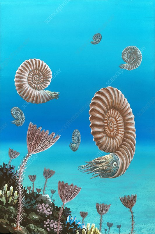 Ammonites in a Jurassic sea