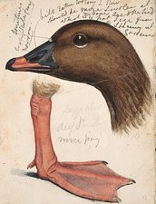 Pink footed Goose, artwork