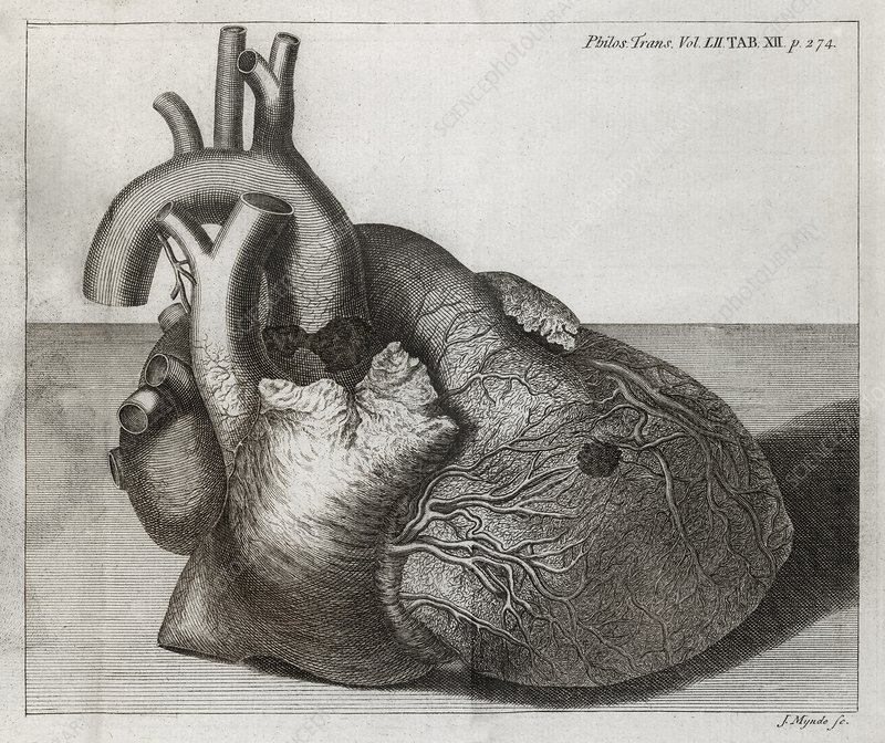 Heart of King George II, 18th century