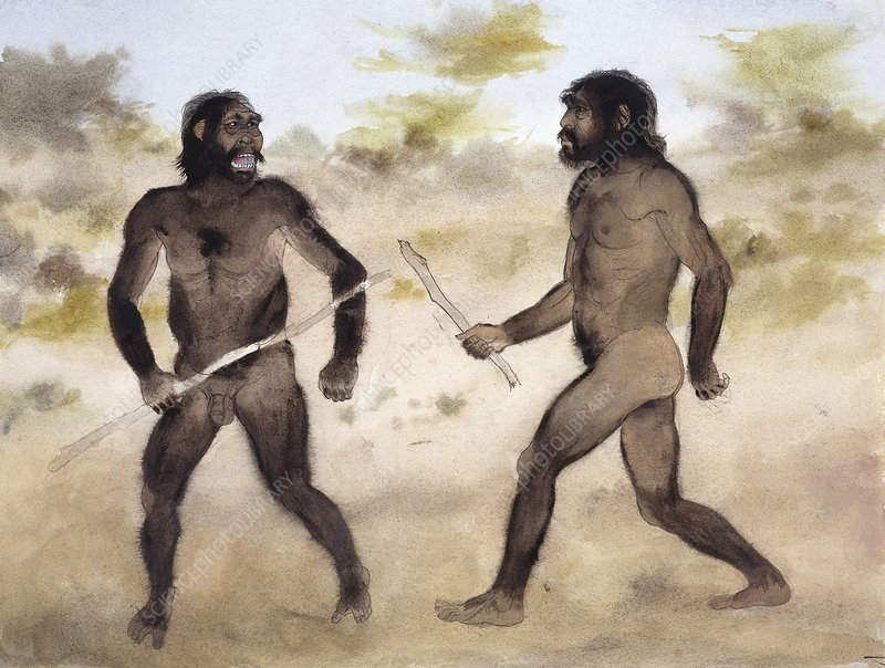 Homo erectus attacking Paranthropus