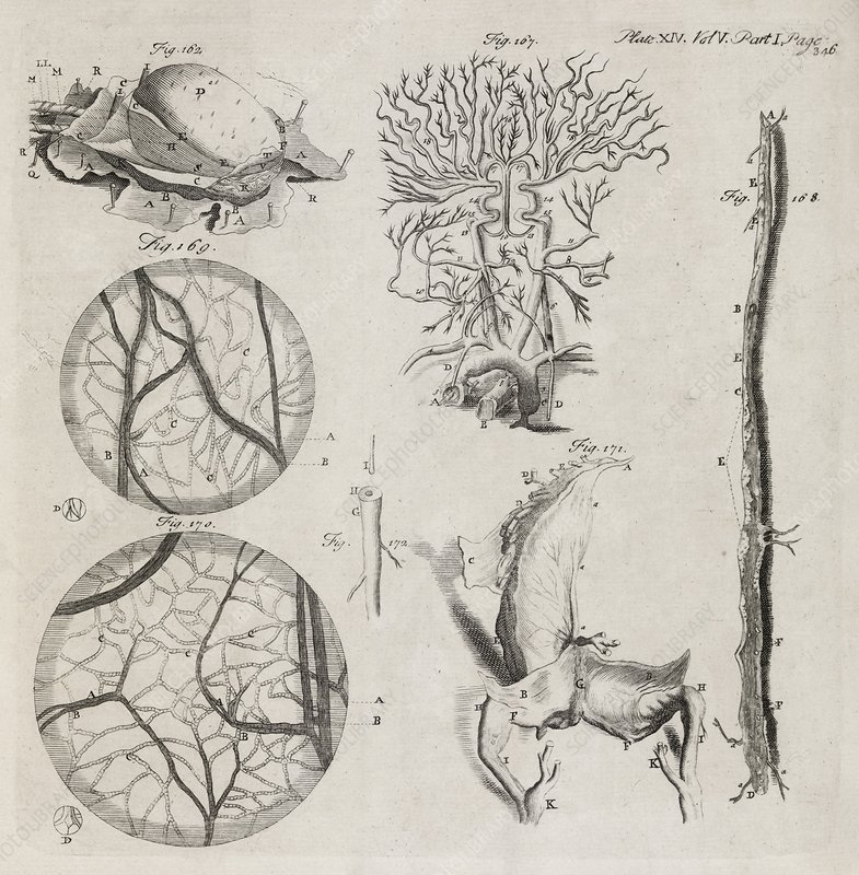 Biological illustrations, 18th century