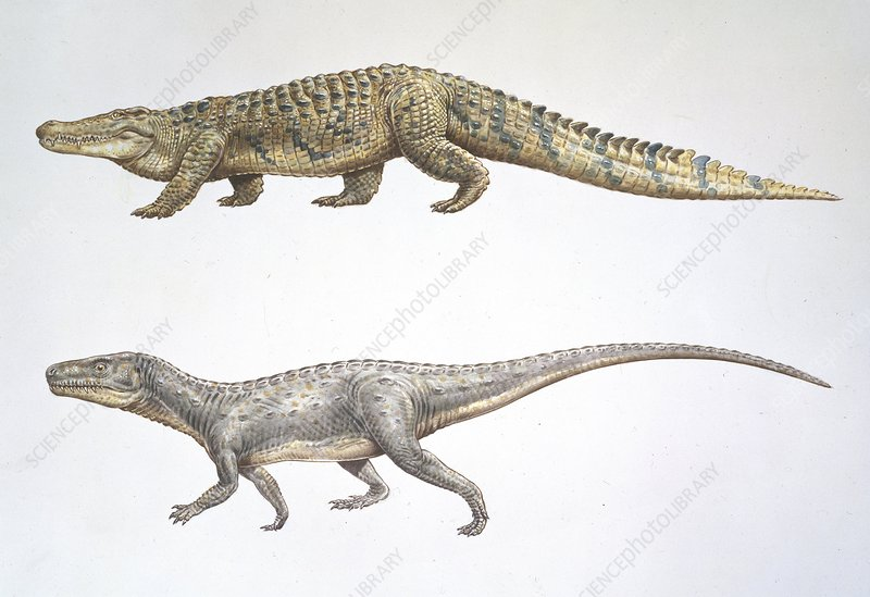 Crocodile and Euparkeria, artwork