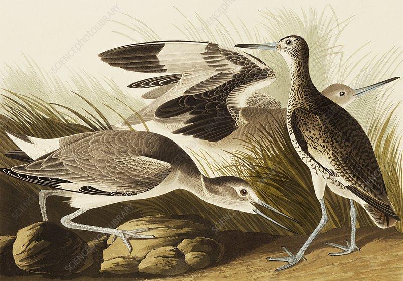 John James Audubon Natural History Museum