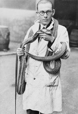 Zoologist with king cobra, 1930s