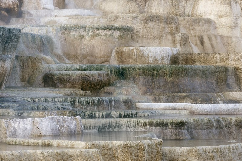 Mineral terraces, Mammoth Hot Springs