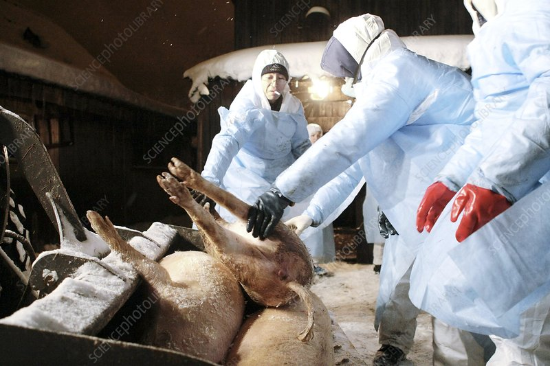 Animal infection control, Russia
