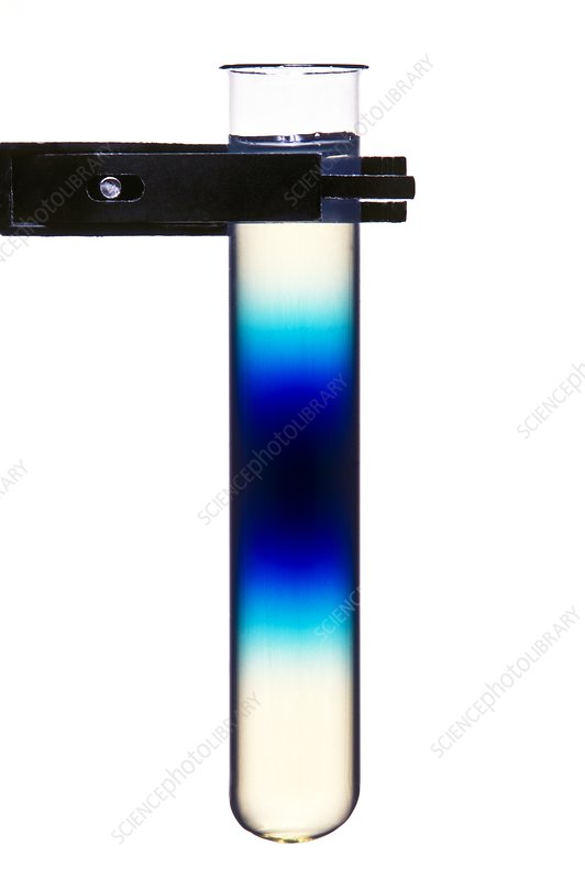 Rate of diffusion of mythelin blue in agar jelly