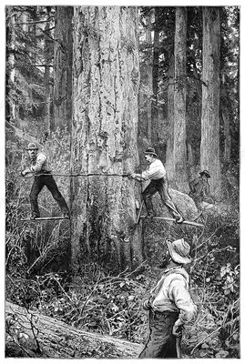 Plantation forestry, 19th century